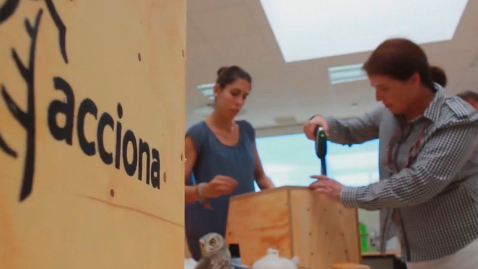 ACCIONA helps endangered birds to increase their population