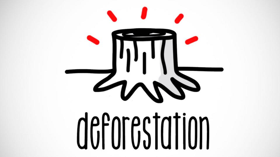 Deforestation | Sustainability